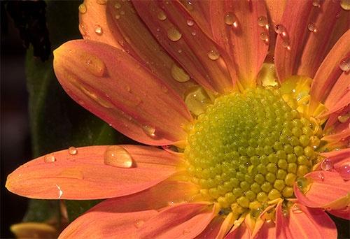 Flower by danpen