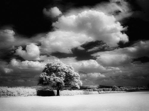 Tree in Field by gpwalton