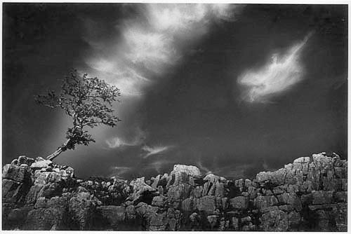 TREE ON THE MOOR 2 by gpwalton