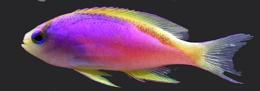 Bright coloured Fish