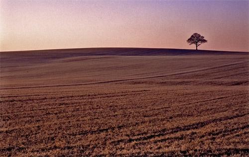 Tree by bill j