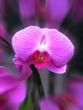 orchid by gwynann