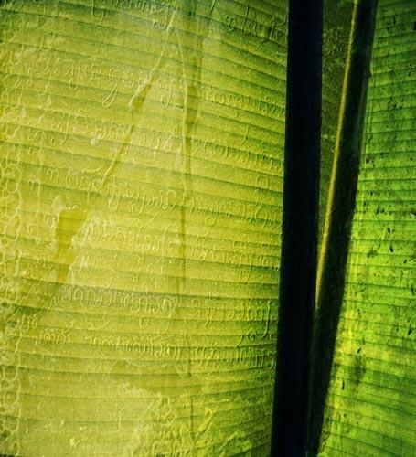 Stone Palm by stephaniebelton