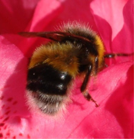 Busy Bee by malc