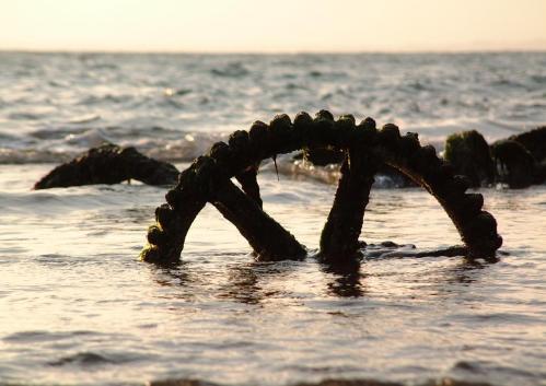 sea cog by pks