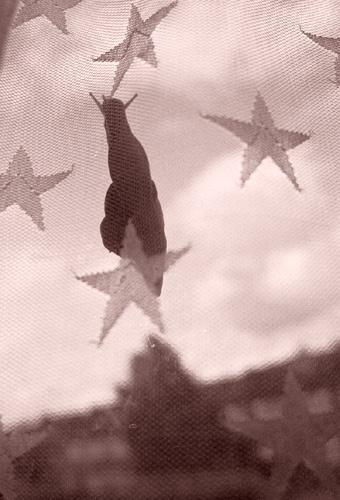 superstar stunt snail by gaz revs