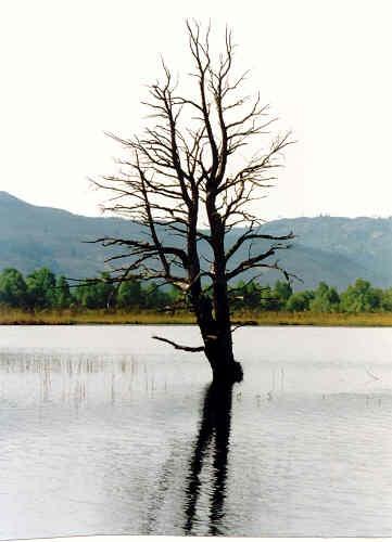 Drowned Tree by stompie