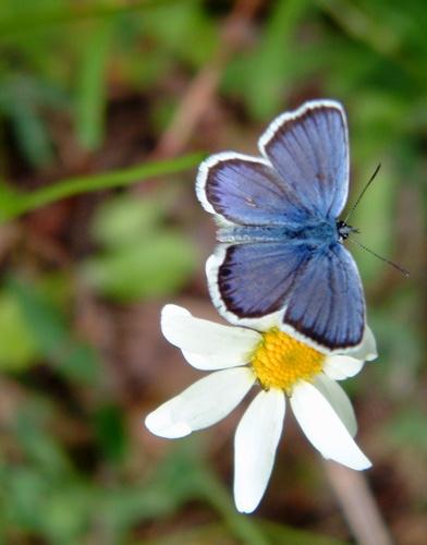 blue wonder by kingseany
