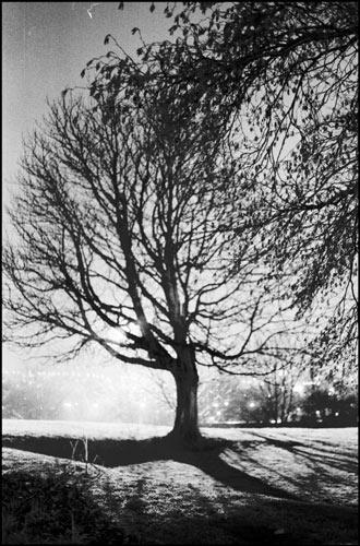 tree the light by gaz revs