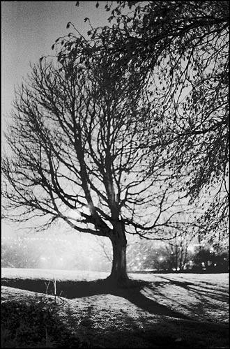 tree re-post by gaz revs