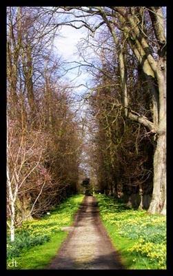 Woodland Walk by tandav
