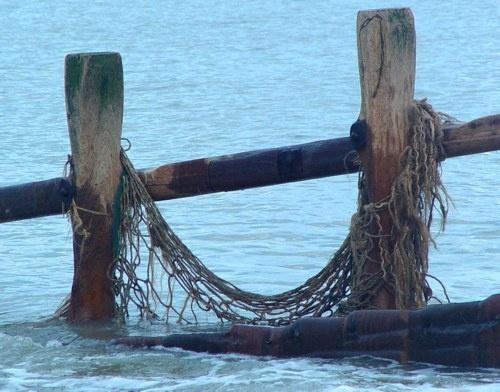 Surfin\' the Net by annadave