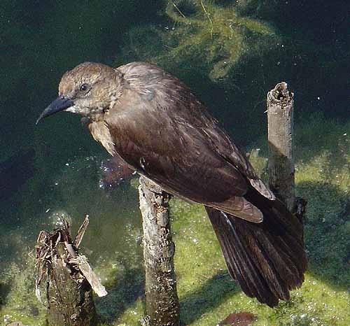 Need help with bird ID by notabimbo