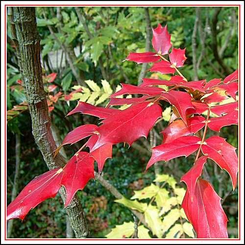 Red Spring by guzman