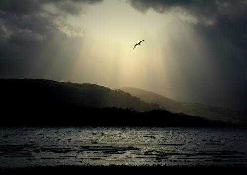 seagull in sunbeam by pks