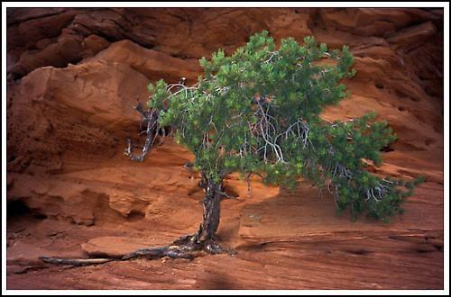 Lonely tree by AlanTW