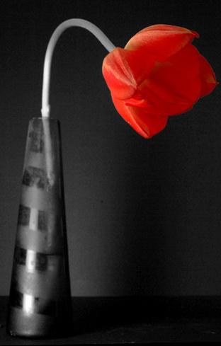 Otro tulipan by niamh
