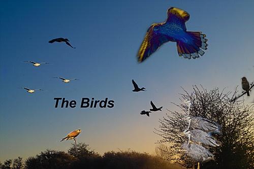 Hitchcock\'s \'THE BIRDS\' by IanA
