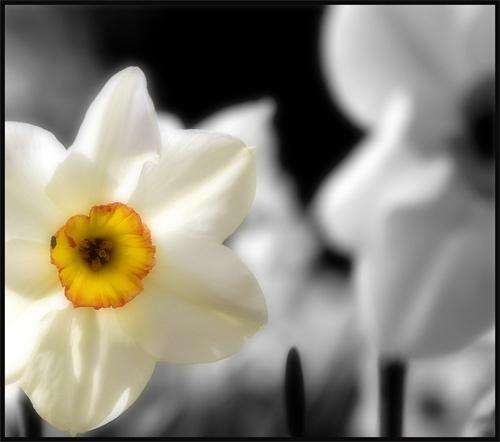 Flower by nikguyatt