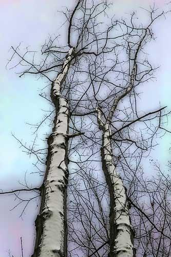 Snowblasted by John-LS