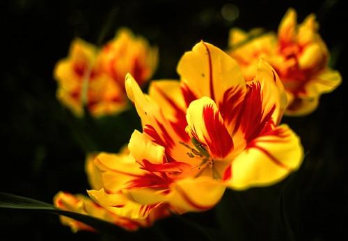 Primavera by nicbone