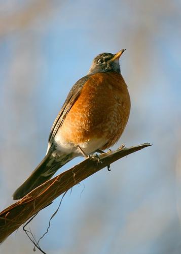 Early Bird by billma
