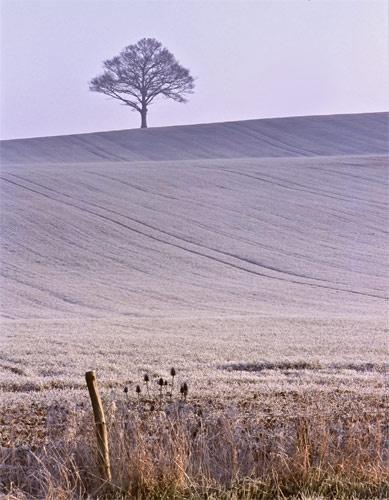 Frosty field by bill j