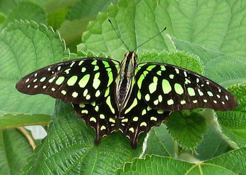 Beautiful Butterfly by fizz