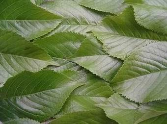 Leaves by dani2