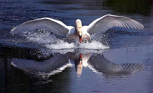 splash landing by proberts
