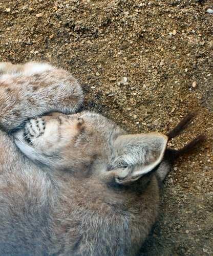 sleeping beauty by laura1