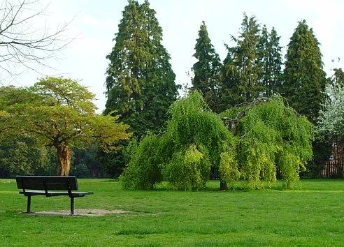 bench in spring by annadave