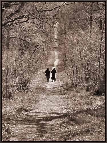 Stroll by ukuwi