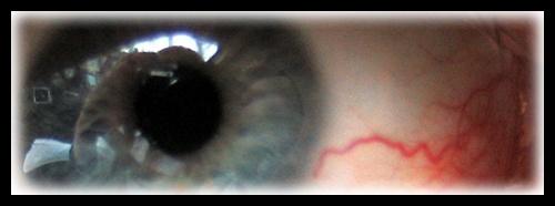 Eye Eye by pdunn