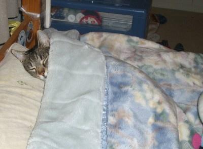 My Cat Micio by laura1