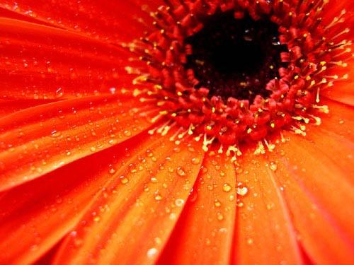 Morning dew by vivo