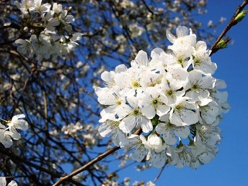 Summer bloom by vivo