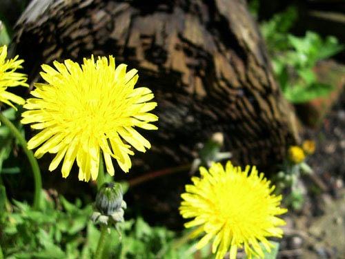 Garden Life by vivo