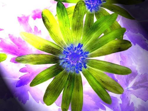 flower by grumpalot
