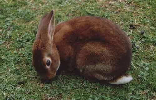 Hunny Bunny by Nyx
