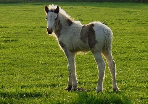 Backlit Foal by theyokel