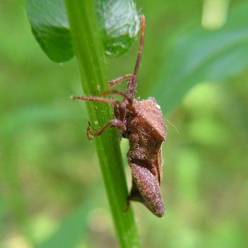 strange bug by jeffandrebecca