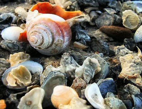She saw sea shells!! by daviewat