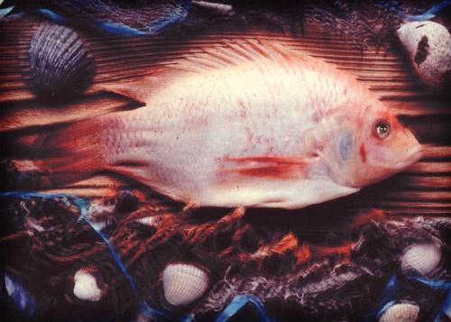 SOMETHING FISHY by mcnair