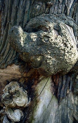 Tree goblin by saxon_image