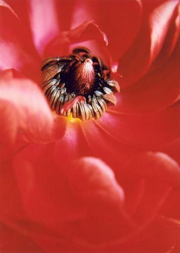 Spring Flower by ariane