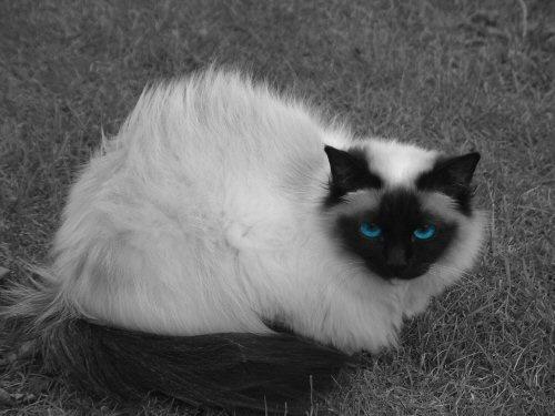 Ole Blue eyes by yidthekid