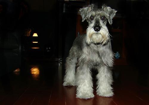 Austin the dog by markah