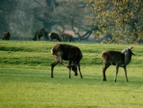 Deer Park by rperry