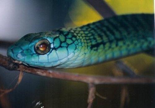 Snake by n.groves
